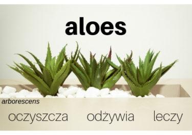 Aloes – odżywia, oczyszcza, leczy